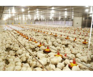 Copacol will decrease chicken production in 17%